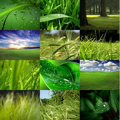 Windows Vista Wallpapers Green